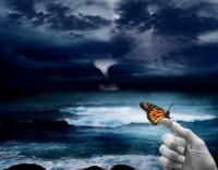 Butterfly-300x235