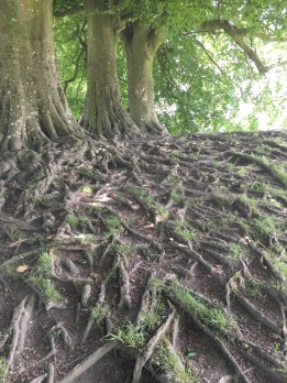 communing with roots